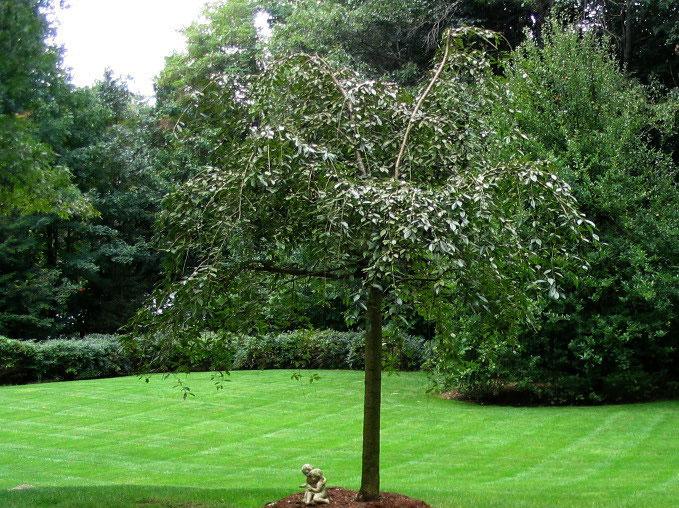 muir-bros-landscaping30