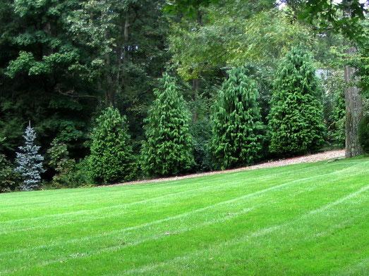 muir-bros-landscaping31