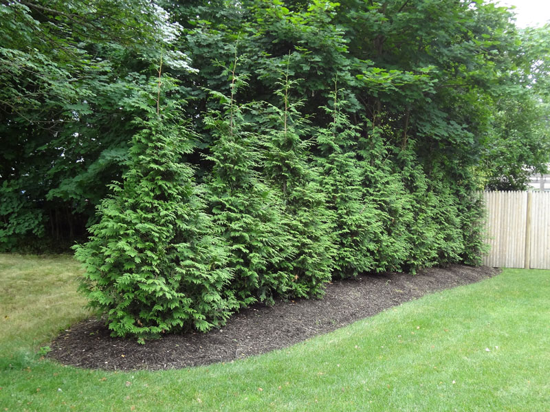 Tree Installation and Care and Lawn Maintenance