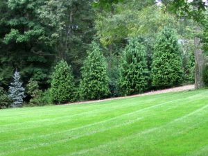 lawn and yard maintenance